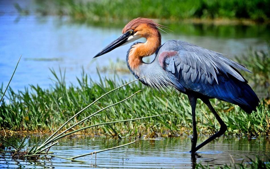 Photo oiseau for Photo oiseau